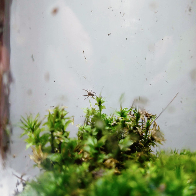 Spider in Terrarium