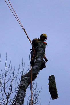 Inverness Tree Services, Nairn Tree Services