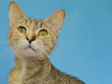 Cat of the Week - DEMI!