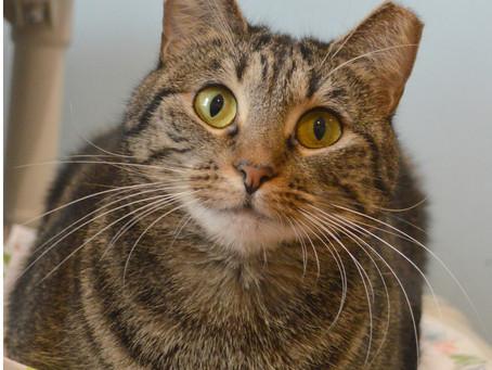 Cat of the Week - TIFFANY!