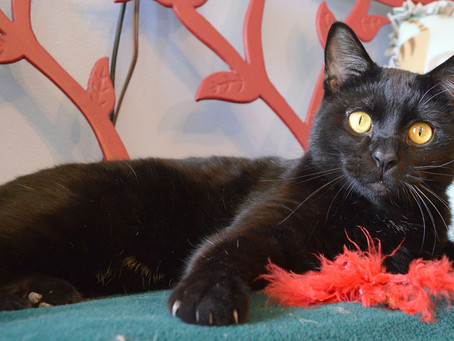 Cat of the Week - BILLY!