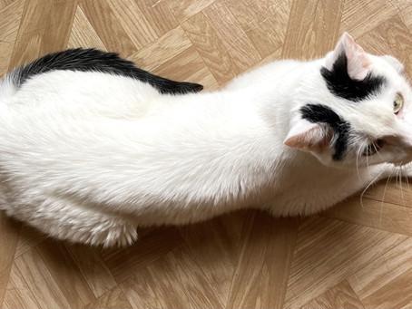 Cat of the Week - MILO!