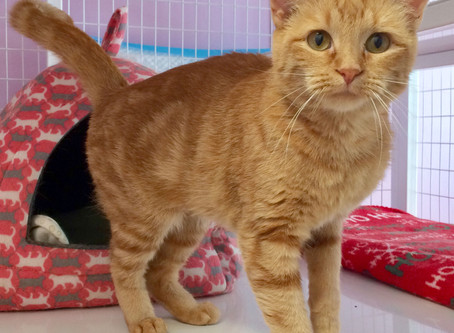 Cat of the Week - ZINNIA!