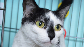 Cat of the Week - MATILDA!
