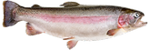 Trout_edited.png