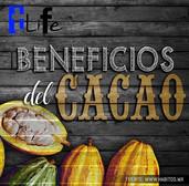#TliFe Beneficios del Cacao
