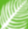 Palm Sunday Logo.png