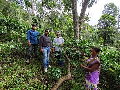 TagOne team in coffee fields