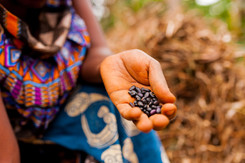 Seed to sale traceability technologies
