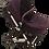 Thumbnail: Purple Stroller/White Frame