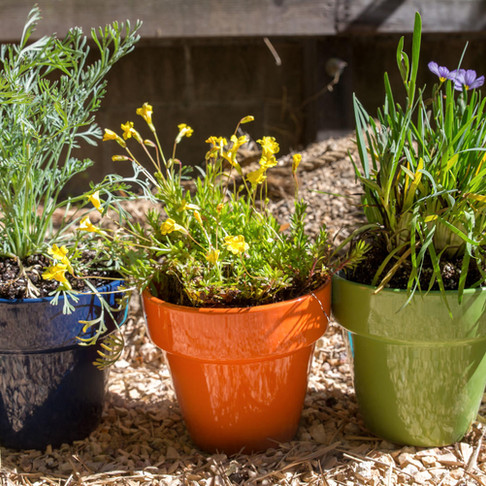What to plant on your balcony or patio for springtime
