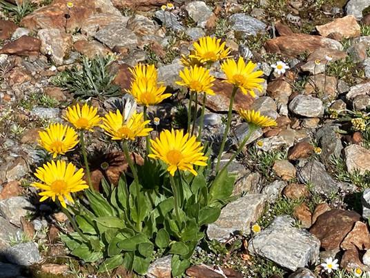 leuchtende Blumen am kargen Fels.jpeg