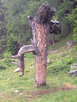 Baum Tschiernock speziell.jpeg