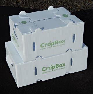 crop-box-for-csa.jpg