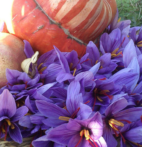 fiori con zucca.jpg