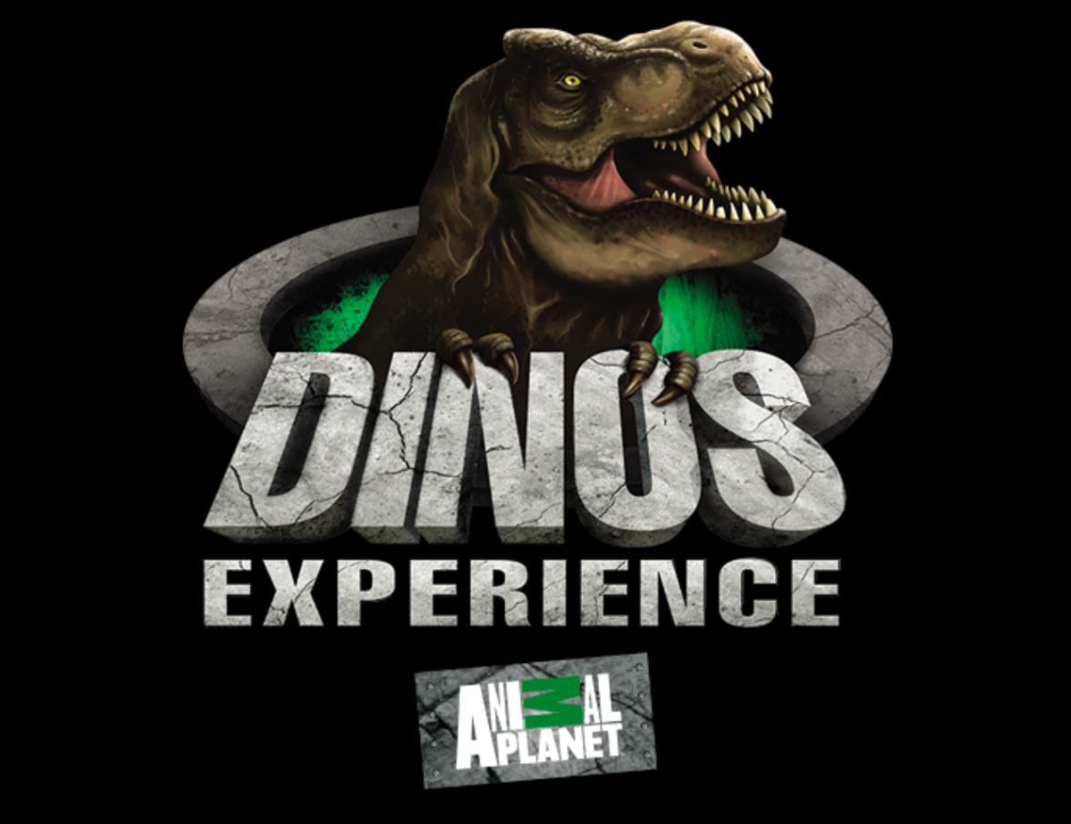Dino's Experience
