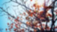 autumn-fall-leaves-89290.jpg