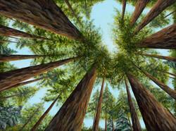 Ascending a Redwood Grove 1.2