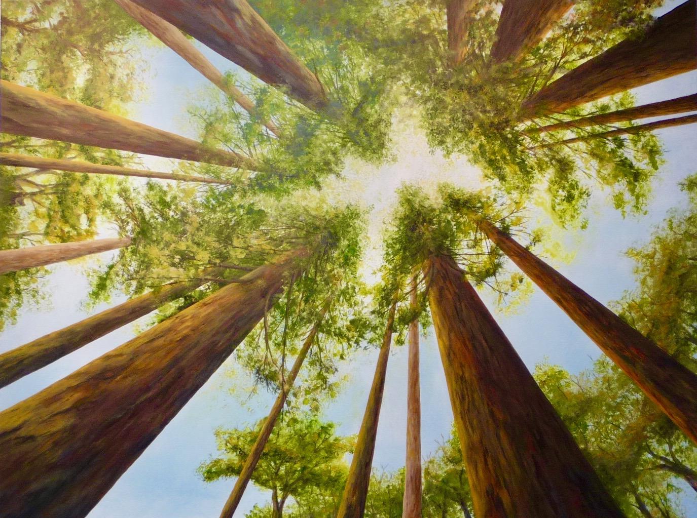 Ascending a Redwood Grove