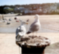 0.Seagulls.jpg
