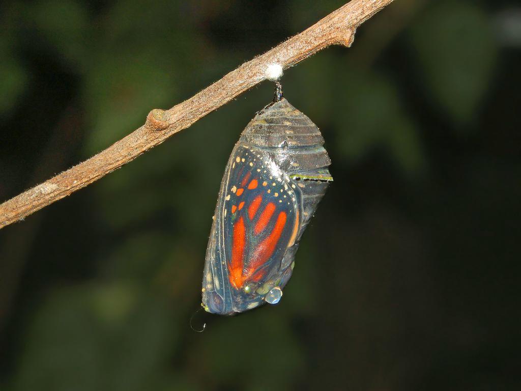 Monarch PreEmergence