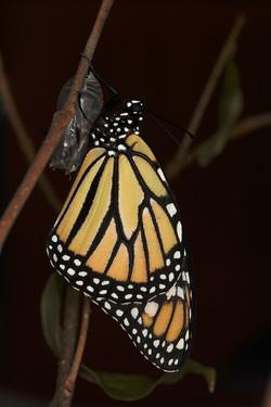 Monarch Complete