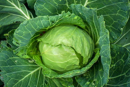 Cabbage ( 1 Head )