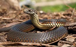 snakes-in-yard.jpg