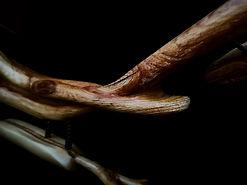 Broken Wing - Fibres Unite