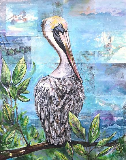 Pelican Quietude