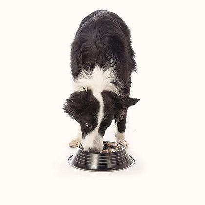 Kurs Dietetyka psów