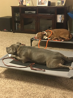 Chino and Zeus placing