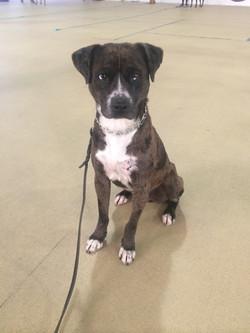 Camo my shelter dog at Starmark