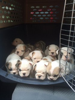 Pups going to vet for the first time