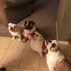 Bulldog line up
