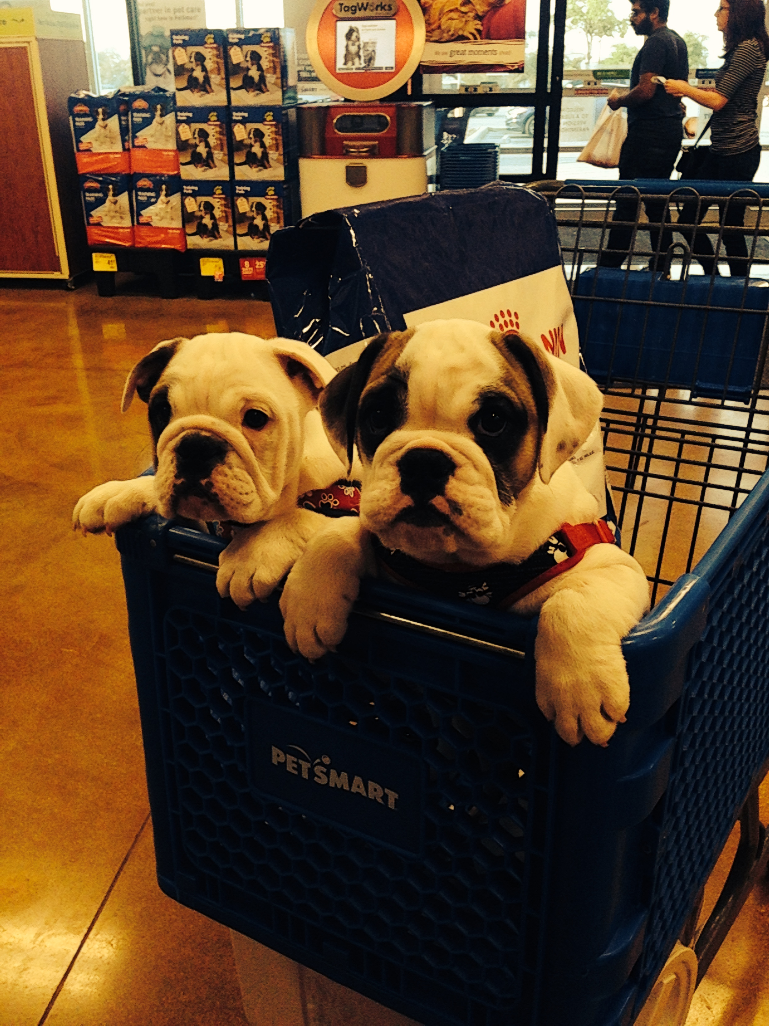 Shopping at Petsmart