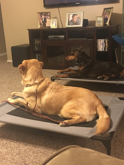 Riley and Scooter placing