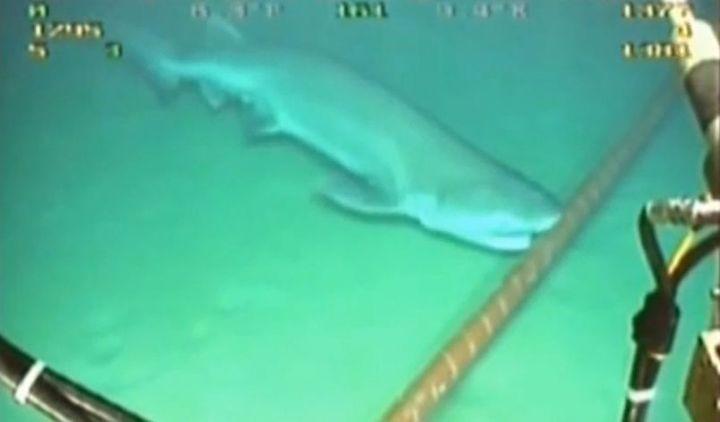 Connexion internet lente? C'est à cause des requins!