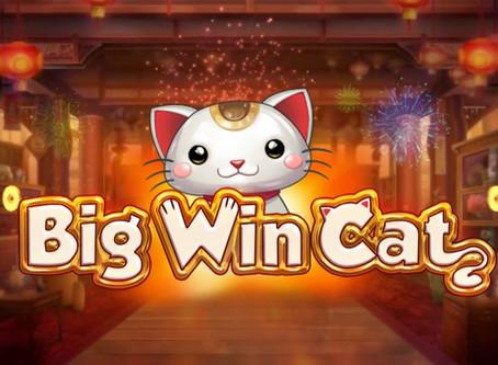 Tips Main Big Win Cat Online Slot Mega888