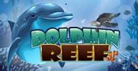 Cara Main Dolphin Reef Mega888