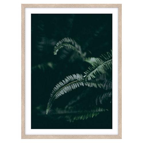 Dark Foliage 1 of 2