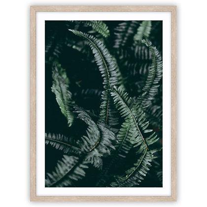 Dark Foliage 2 of 2