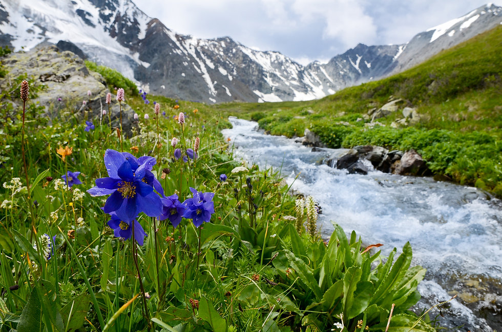 Relaxing LMT Purple flowers with green plants in the mountains