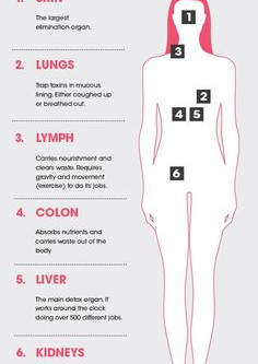 Organs that help to clean up our bodies