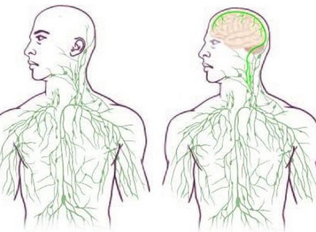 Neuroscience discovers lymphatic vessels in the brain