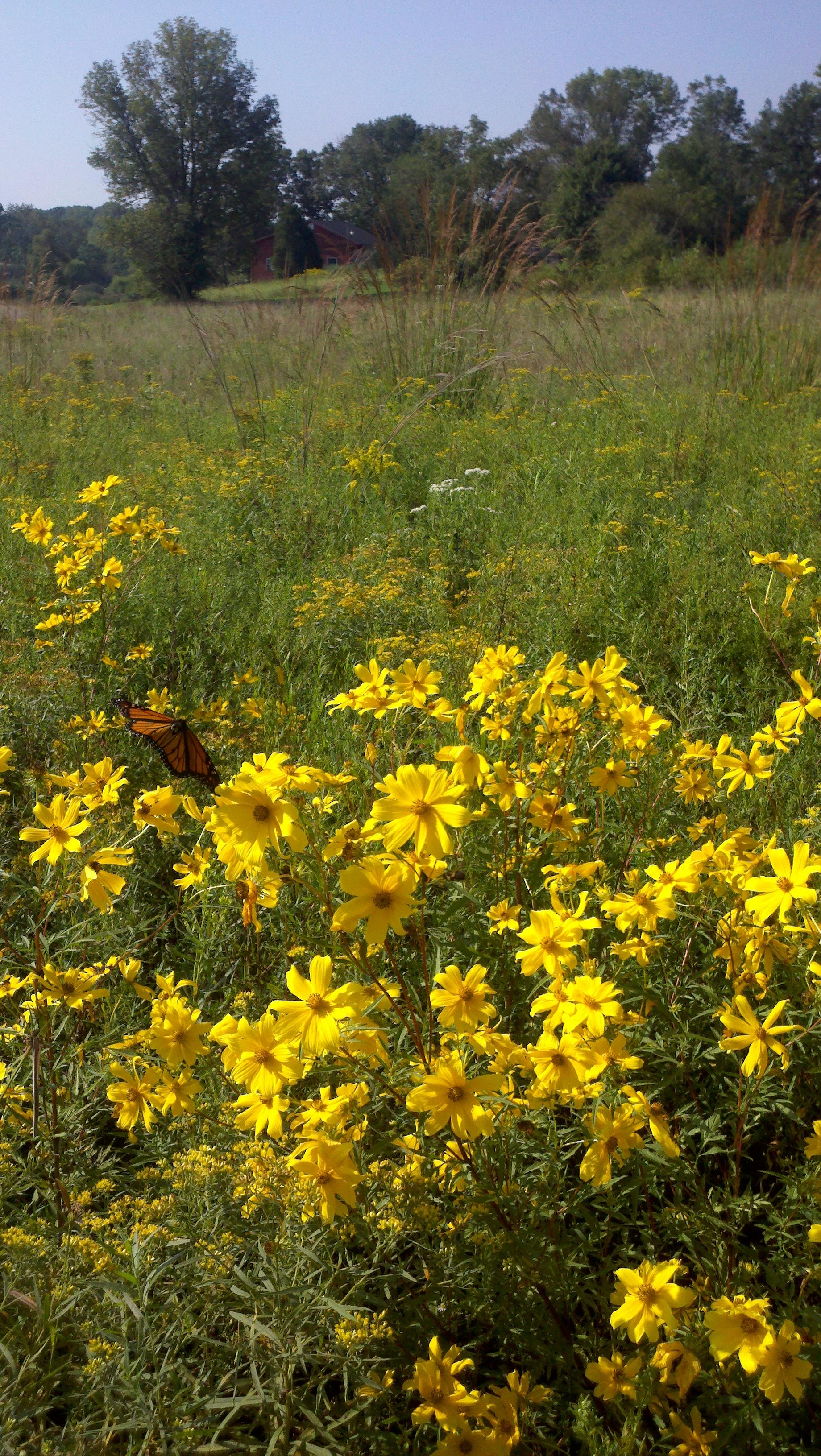 BNP field butterfly