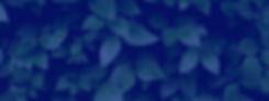 Screen Shot 2020-01-21 at 8.53.26 PM.png