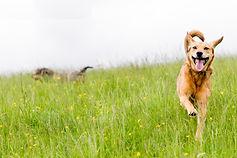HAPPY_DOG_HOMEPAGE_01.jpg