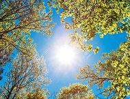 47491271-spring-summer-sun-shining-throu