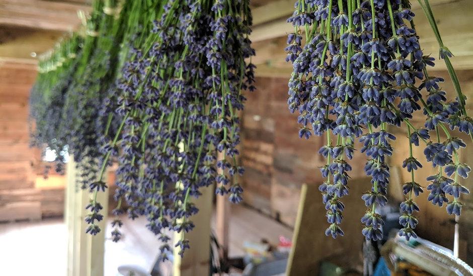 lavenderhanging2.jpg